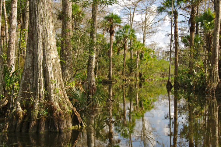 Roads and driveways paved with asphalt services by All County Paving lead to the beautiful Florida Everglades