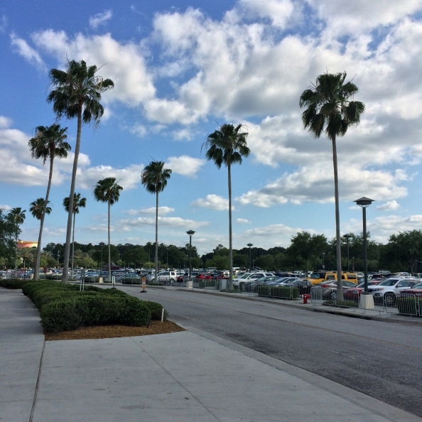 Orlando Palm Trees w/ Blue Sky in Disney World